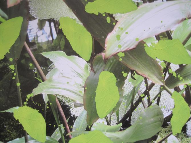 P.18 Pigment auf Photo 30x44 cm